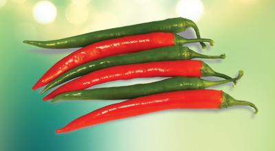 Green & Red Chili Pepper